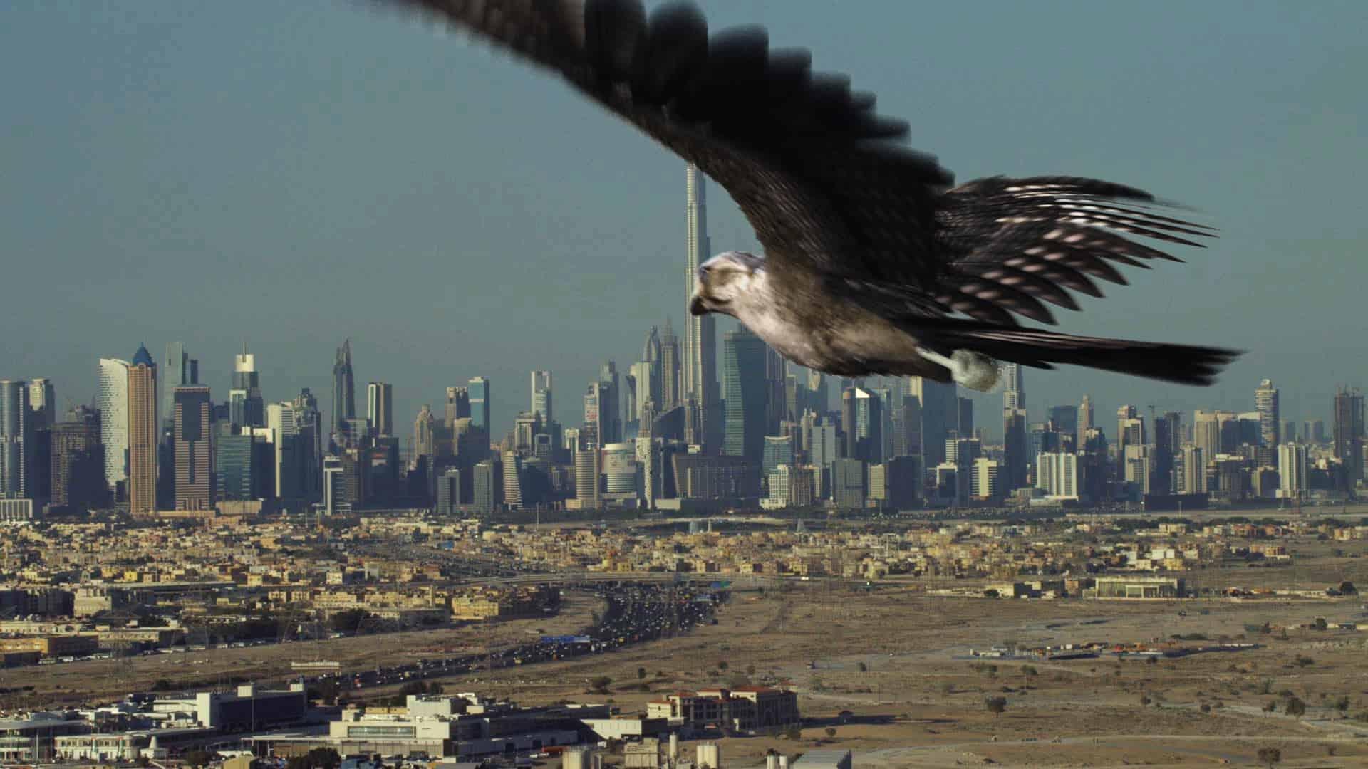Vision 2021 Falcon Breakdown