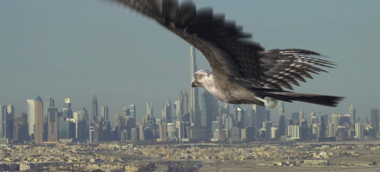 Vision2021-Falcon-Dubai-Hair-and-Fur